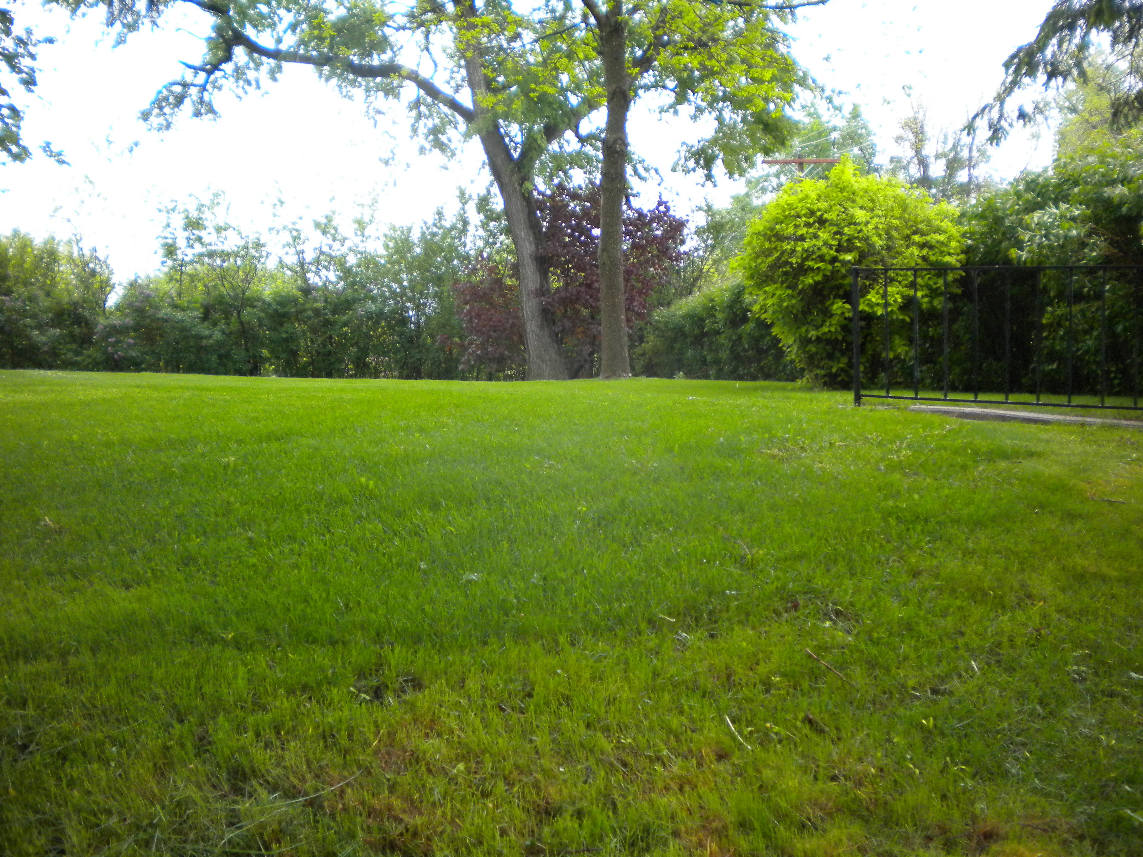 Tiêu diệt cỏ dại trong màu hè